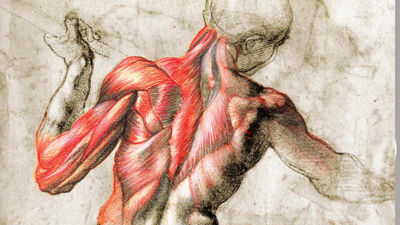 Conocer el cuerpo humano a través de vídeos didácticos