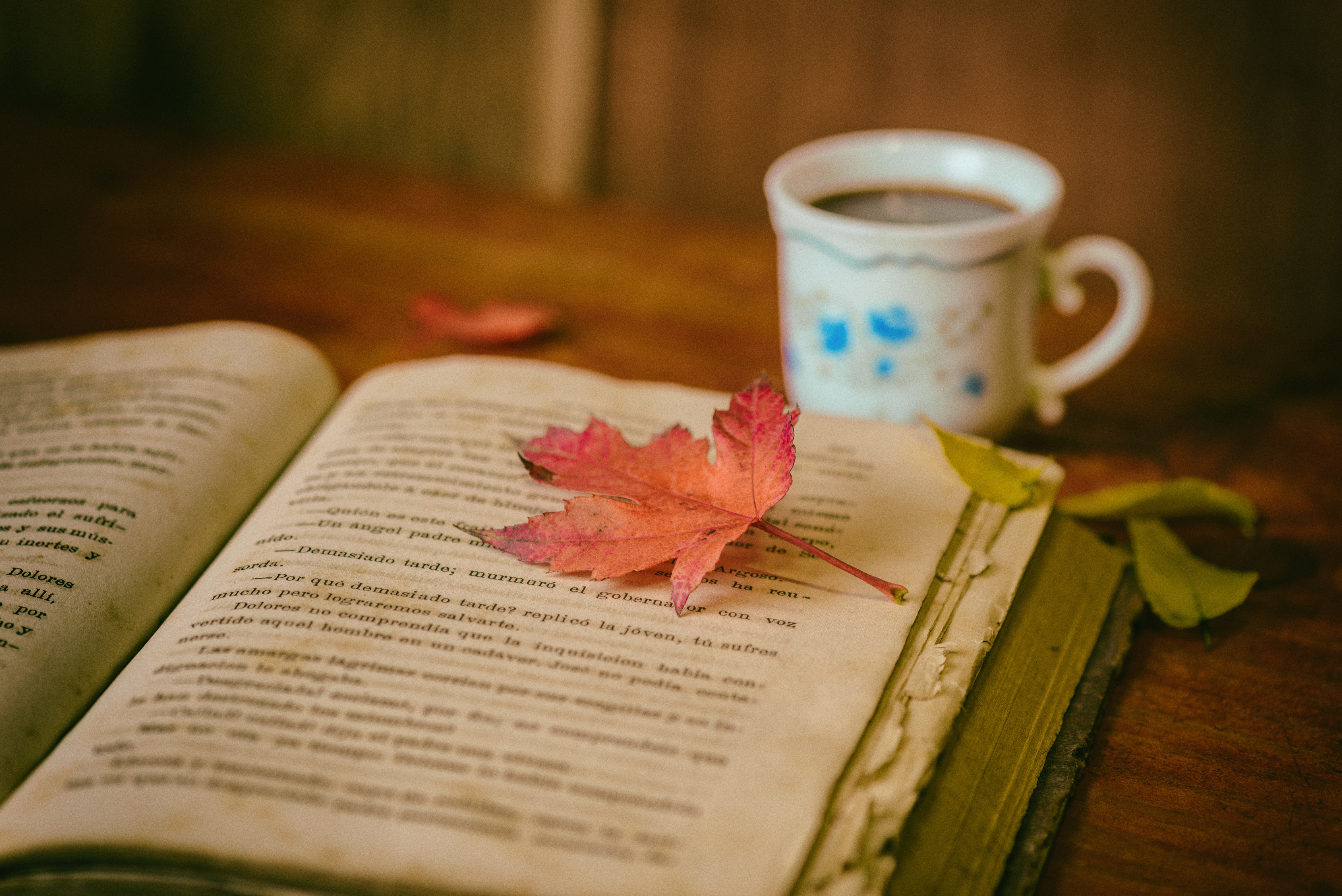 book-coffee-flower-reading-cup-color-670379-pxhere.com