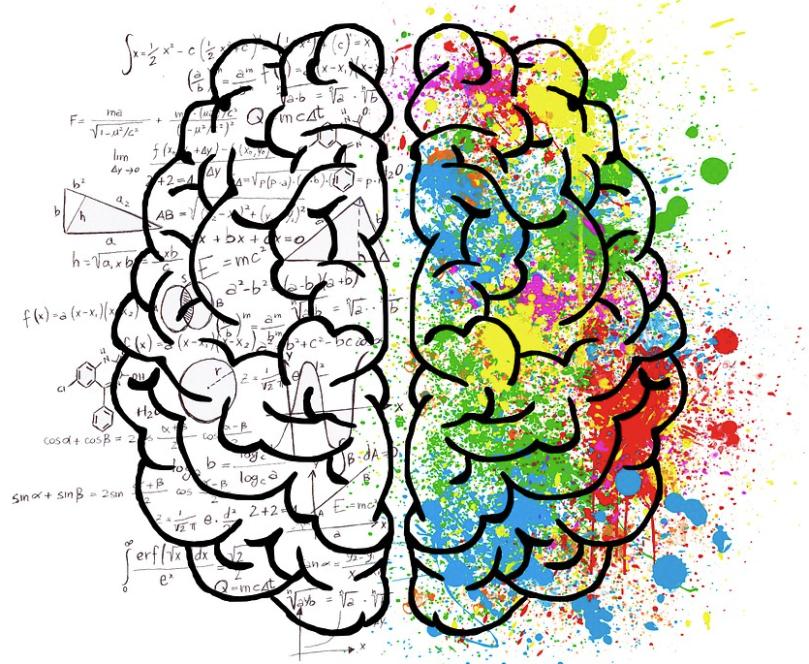 Numerosos estudios del (MIT) recomienda trabajar los dos hemisferios del cerebro desde tempranas edades